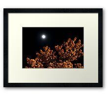 In the Moon Light Framed Print