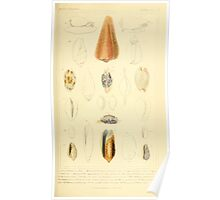 The Animal Kingdom by Georges Cuvier, PA Latreille, and Henry McMurtrie 1834  244 - Mollusca Mollusks Poster