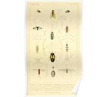 The Animal Kingdom by Georges Cuvier, PA Latreille, and Henry McMurtrie 1834  484 - Insecta Insects Poster