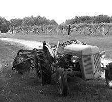 """Tractor of the Vineyard"" by Sherry Hunt"