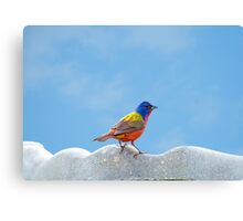 Elusive Mr. Painted Bunting Canvas Print