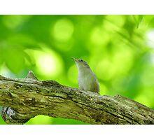 Small songbird Photographic Print