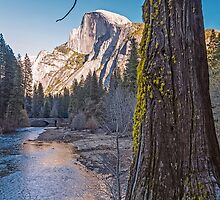Old Growth and Mountain Scenery by TonyCrehan