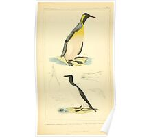 The Animal Kingdom by Georges Cuvier, PA Latreille, and Henry McMurtrie 1834 746 - Aves Avians Birds Poster