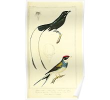 The Animal Kingdom by Georges Cuvier, PA Latreille, and Henry McMurtrie 1834 653 - Aves Avians Birds Poster