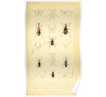 The Animal Kingdom by Georges Cuvier, PA Latreille, and Henry McMurtrie 1834  414 - Insecta Insects Poster