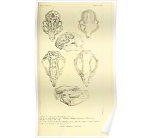 The Animal Kingdom by Georges Cuvier, PA Latreille, and Henry McMurtrie 1834 589 - Mammalia Mammals Poster