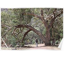 Wilpena Pound, Outback SA Poster