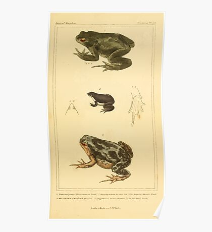 The Animal Kingdom by Georges Cuvier, PA Latreille, and Henry McMurtrie 1834  040 - Reptilia Reptiles Poster
