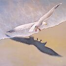 Seagull In Flight #3 by Karsten Stier