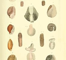 The Animal Kingdom by Georges Cuvier, PA Latreille, and Henry McMurtrie 1834  231 - Mollusca Mollusks by wetdryvac