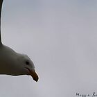 Simply Bird by maggiebarra