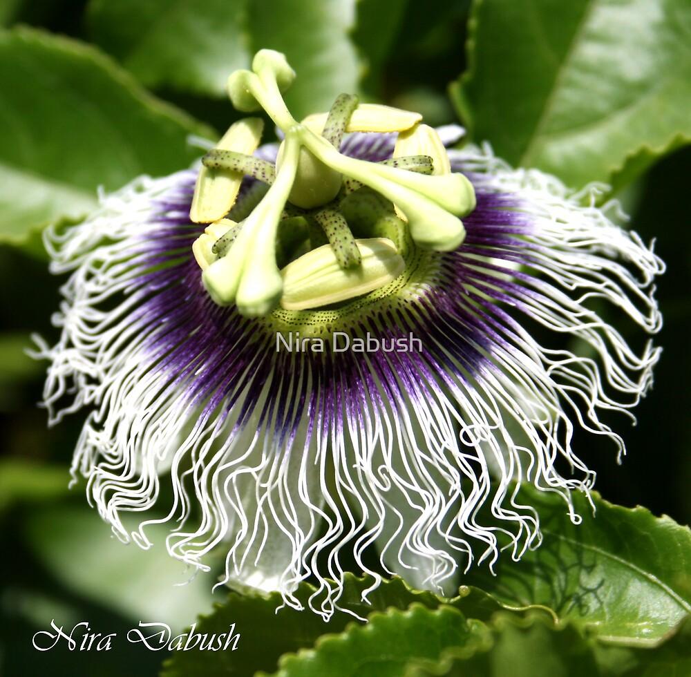Lacing Natural by Nira Dabush