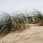 The Dunes by maggiebarra