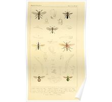 The Animal Kingdom by Georges Cuvier, PA Latreille, and Henry McMurtrie 1834  524 - Insecta Insects Poster