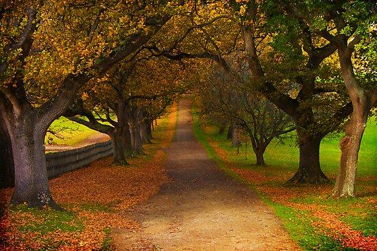 Avenue of Lost Souls by Rhana Griffin