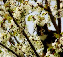 Tree Cat by MarianaEwa