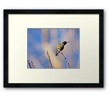 Golden Opportunity Framed Print