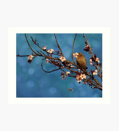Bird n Blossoms Art Print