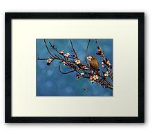 Bird n Blossoms Framed Print