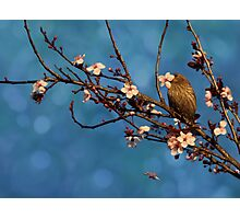 Bird n Blossoms Photographic Print