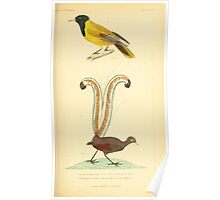 The Animal Kingdom by Georges Cuvier, PA Latreille, and Henry McMurtrie 1834 674 - Aves Avians Birds Poster