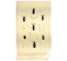 The Animal Kingdom by Georges Cuvier, PA Latreille, and Henry McMurtrie 1834  434 - Insecta Insects Poster