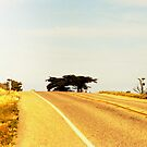 Cabrillo Highway by John Schneider