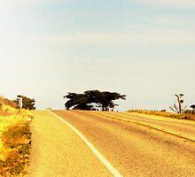 Cabrillo Highway by John Schneider