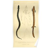 The Animal Kingdom by Georges Cuvier, PA Latreille, and Henry McMurtrie 1834  043 - Reptilia Reptiles Poster