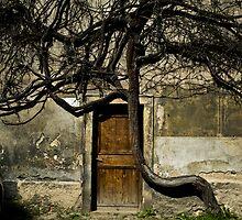 Darkness by Lucia Galovicova