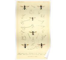 The Animal Kingdom by Georges Cuvier, PA Latreille, and Henry McMurtrie 1834  530 - Insecta Insects Poster