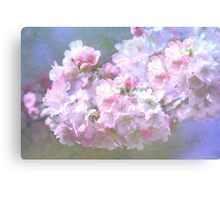Cherry Blossom in Spring Canvas Print