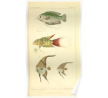 The Animal Kingdom by Georges Cuvier, PA Latreille, and Henry McMurtrie 1834  129 - Pisces Fish Poster