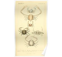 The Animal Kingdom by Georges Cuvier, PA Latreille, and Henry McMurtrie 1834  329 - Crustacea Crustaeans Poster