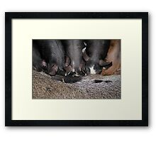Heads Down Bums Up Framed Print