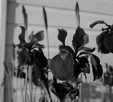 Black and White Flowers by Robert Bruce Anderson