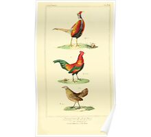 The Animal Kingdom by Georges Cuvier, PA Latreille, and Henry McMurtrie 1834 721 - Aves Avians Birds Poster