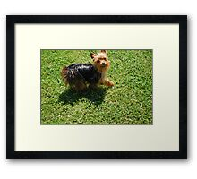 Mia Smiling Framed Print