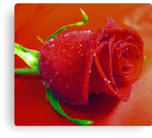 *RED ROSE* Canvas Print