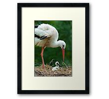 mother and baby stork Framed Print