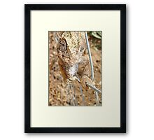 Chameleon Walking on A Wire Framed Print