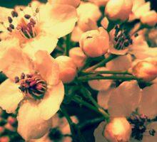 Warm Cherry Blossoms Sticker