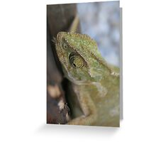 Chameleon In Green Shades Greeting Card