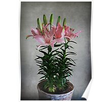 Asiatic Lily Poster