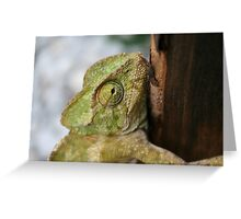 Chameleon Hanging On To A Door Greeting Card