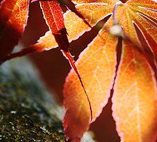 Red Leaves 42  by Nancy Lovering