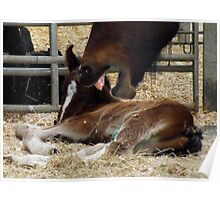 My Foal !!! Stay Away Poster