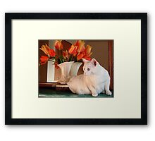 Snowball and the Tulips Framed Print
