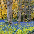 Bluebell Oil Induced Dreamscape at Godolphin House by Mike Honour
